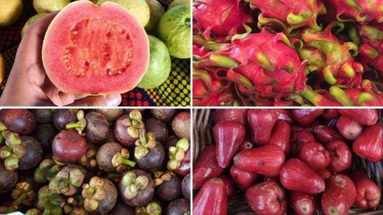 guava mangostan dragonfruit rose apple